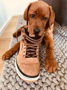 Wie? Nicht mein Schuh?