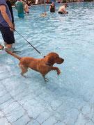 September 2016: Freibad mit Hunden