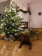 Weihnachten 2018: Der Geschenkebeschützer