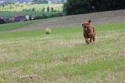 Ich krieg den Ball, ich krieg ihn.
