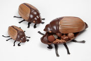 Schokoladen Pralinen Käfer (Saisonartikel)