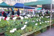 Im Frühling grosse Auswahl an Kräuter- und Gemüsejungpflanzen