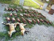 Die Strecke: 2 Fuchs, 29 Hahnen, 1 Henne, 6 Schnepfen, 3 Eichelhäher