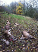 2011-11-12, Utzenhain (D): Strecke des Rieglers mit 12 Schützen, rechts vorne mein Kalb