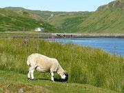 Loch Bracadale Struan, Isle of Skye