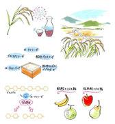 日本酒の基礎知識
