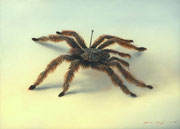 Genia Chef,  Spider from My Collection, 13 x 18 cm, oil on panel