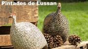 http://ceramique-de-lussan.com