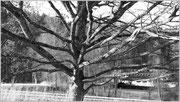 Der Winter ist nackt - Ottobeuren/D