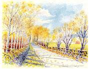水彩画                           晩秋の白樺並木