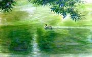 水彩画                             午後の水面