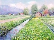 水彩画                             水路のある田園