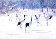 水彩画                             雪原の舞