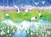 水彩画                             湿原の春 (心象風景)