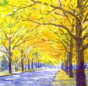 水彩画                             北海道大学銀杏並木