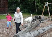 Hundedressur auf einem Picknick Platz