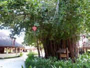 Banyan Tree im Rezeptionsberich