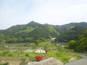 山の様子(5/14) 鮮やかな新緑になりました。