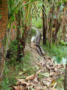 trekking to our host's house in Battambang, Cambodia