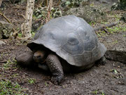 Isla Floreana, Galapagos Islands