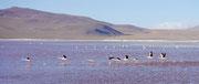 Laguna Colorada, Bolivia (San Pedro de Atacama, Chile to Uyuni, Bolivia)