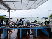Fishermen's market at Pelican Bay, Isla Santa Cruz, Galapagos Islands