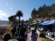 Saturday Animal Market in Otavalo, Ecuador