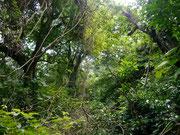 Volcan Concepcion - Isla Ometepe, Nicaragua