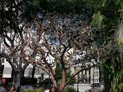 Parque Bolivar (also known as Parque Iguana), Guayaquil, Ecuador