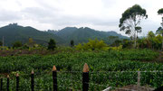 Coffee tour in Salento, Colombia