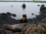 Los Tintoreras, Isla Isabela, Galapagos Islands