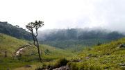 Horton Plains, Nuwara Eliya