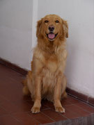 Kira the guapa perra at our homestay in Sucre, Bolivia
