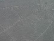 Nazca Lines, Nazca, Peru - Hummingbird (again)!