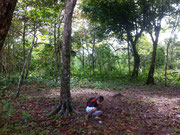 when trying to be tarzan doesn't work :) Bastimentos, Bocas del Toro, Panama