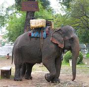 Elephant at Phnom Wat
