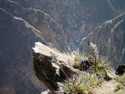 Condor country - the most amazing bird in the world!