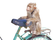 Monkey on vendor's bike at Mui Ne Beach, Vietnam
