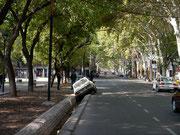 Bad driving in Mendoza, Argentina