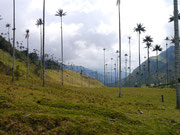Valle de Cocora near Salento, Colombia