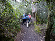 walking in the National Park near Puerto Varas, Chile