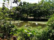 Jardin Botanico - Medellin, Colombia