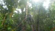 Canopy Tour by zip line in Monteverde, Costa Rica