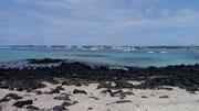 Charles Darwin Centre, Isla Santa Cruz, Galapagos Islands