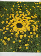 Opere di Andy Goldsworthy