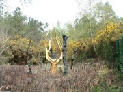 l'arbre d'or, forêt de Paimpont