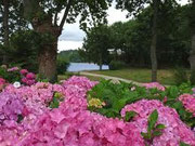 promenade des hortensias
