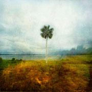 Tree in land acceptée au salon swiss international