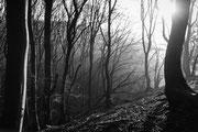 Mystische Waldstimmung im Jasmunder Nationalpark