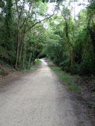 Sentiers dans la forêt à explorer à pied ou à vélo...